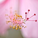 This blur moment make splendid image...: On Featured: Petals-and-pollen Group  by Kornrawiee