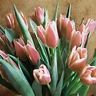 Old Time Tulips by Lynne Morris