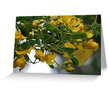 Yellow butterfly bush Greeting Card