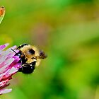 Bumblebee by Lac La Biche by LAaustin