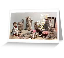 Scottish Fold kittens Greeting Card