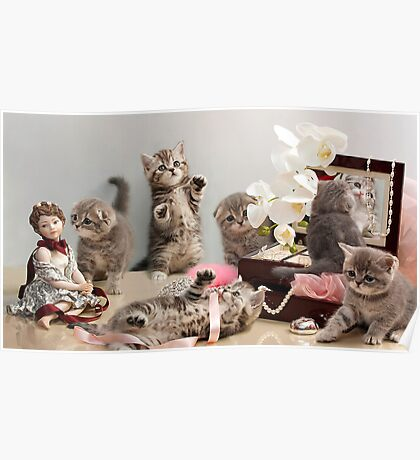 Scottish Fold kittens Poster