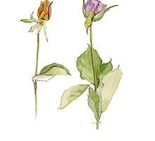 dried roses 2 by reddogcards
