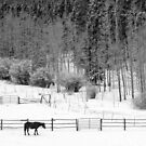 Winter Horses by John  De Bord Photography