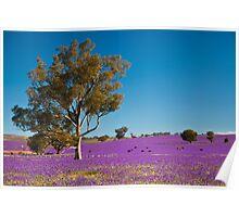 Purple paddock... Poster