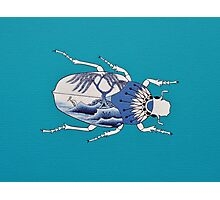 Segment from ' Blue Willow Beetles' Photographic Print