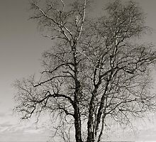Alone - Grindstone City by Joy Fitzhorn