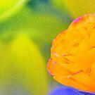 YELLOW-ORANGE ROSE by Duane Salstrand