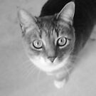 Cat by phluffhed88
