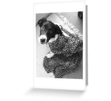 Ringo The Puppy Wonder Greeting Card