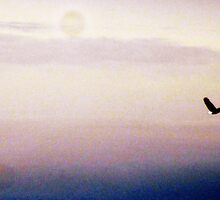 bald eagle in flight by Leeanne Middleton