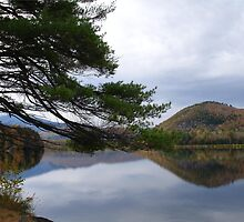 Reflecting in Vermont by Laura Davis