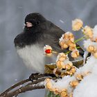 Junco by TheOntology