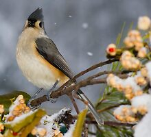 Titmouse by TheOntology