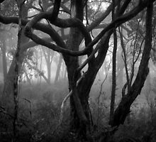 Scary Tree- Central Track, Morialta by Ben Loveday