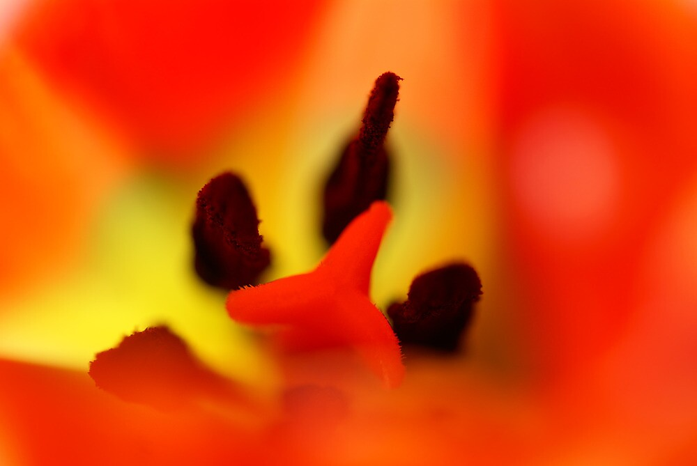 The orange abstract by walstraasart