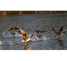 Geese taking flight 1 Photographic Print