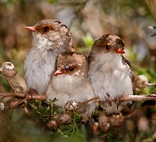 Cute x 3 by Barb Leopold