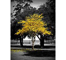 Vanessa's Tree Photographic Print