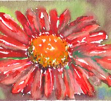 Red Gerber Daisy Watercolor II by Natalie Cardon