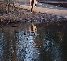 Two Ducks Flirting by DBGuinn