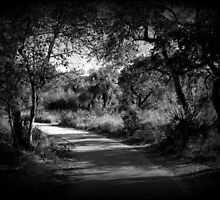 The Path by Jennifer Weitzel