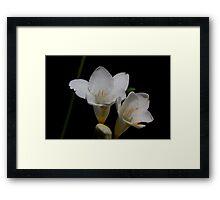 White flower 4550 Framed Print