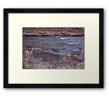 """Doe vs. Wade"" Framed Print"