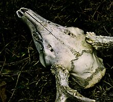 Deer Skull by TheOntology