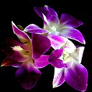 Dendrobium Orchids by © Loree McComb