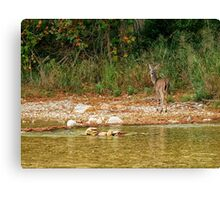 Doe across the Creek Canvas Print