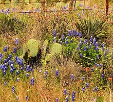 Hill Country Wildflowers by Capt. Charles McKelroy
