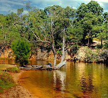 Natural Bushland and Wetlands. by HG. QualityPhotography