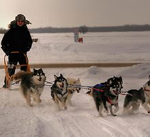 Canadian Dogsled Team by Larry Trupp