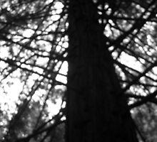 Pine Tree by jadey182