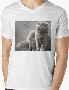 Scottish Fold kittens Mens V-Neck T-Shirt
