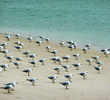 gulls perspective by SUBI