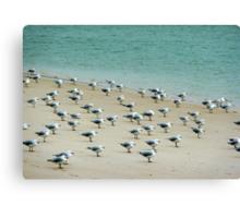 gulls perspective Canvas Print