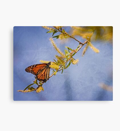 Monarch Blue Abstract Canvas Print