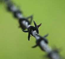 Barbed Wire by kirribas30