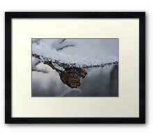 Frozen plums Framed Print