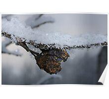 Frozen plums Poster