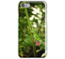 Carolina Anole iPhone Case/Skin