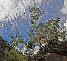 Dunn's Swamp - Kandos NSW Australia by Bev Woodman