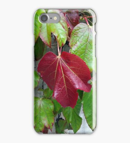 autumnal colors iPhone Case/Skin