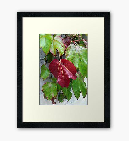 autumnal colors Framed Print