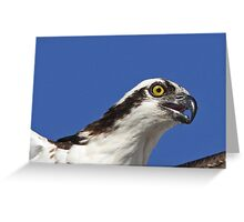 Osprey up close Greeting Card
