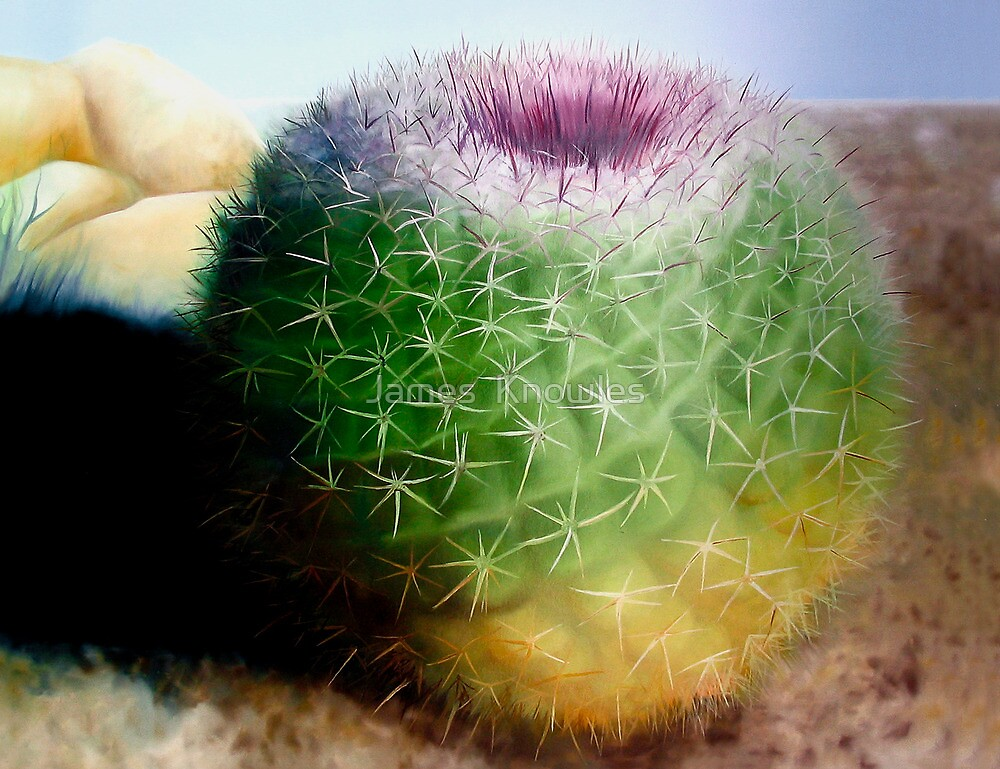 """Spike"" - oil painting of a cactus by James  Knowles"