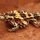 Thorny Devil by Steve Bullock