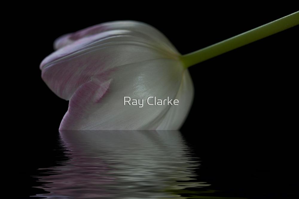 Fallen by Ray Clarke
